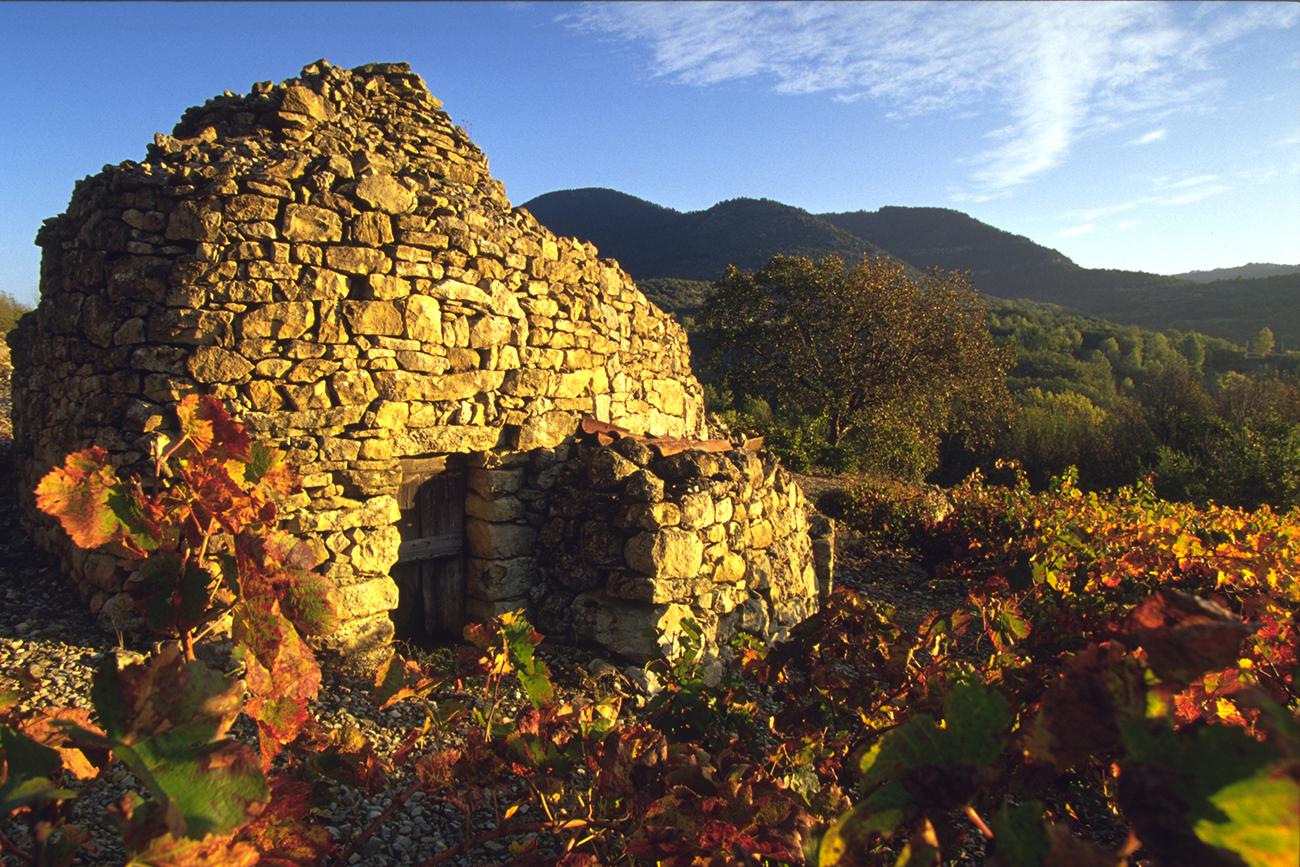 vestige dans les vignes domaine fontareche Corbières